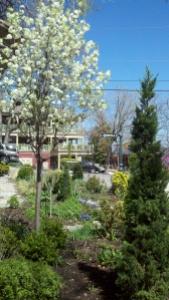 Eureka Springs Sweet Spring Garden
