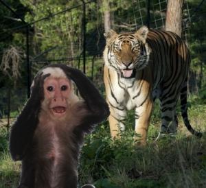 eureka springs attractions intrigue theater turpentine creek wildlife refuge