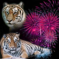 fireworks eureka springs
