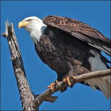 eureka springs eagle cruise