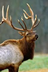 eureka springs elk watching buffalo national river