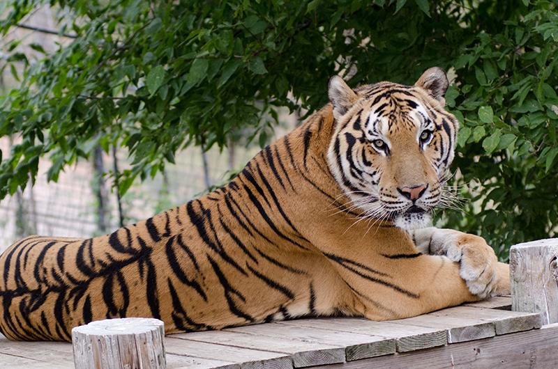 best friends animal sanctuary las vegas